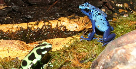 Flamingo Land frogs