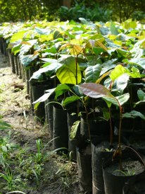 UFP Tree Seedlings